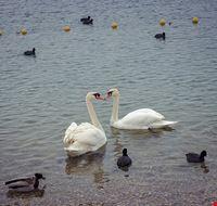 83698  jarun lake
