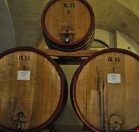 83751  museo della civilta del vino primitivo