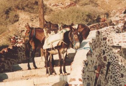 santorini salita dei muli
