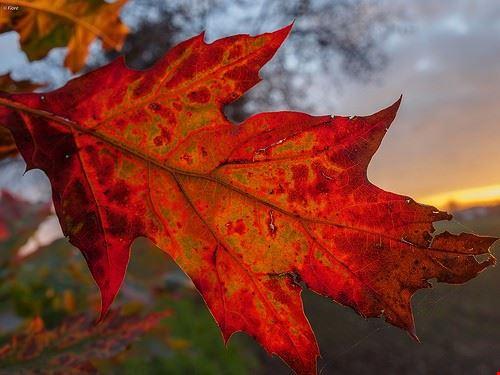 assaggi d autunno
