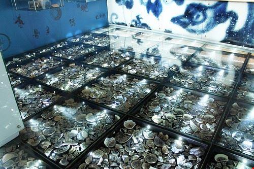 84430  museo di storia di hong kong