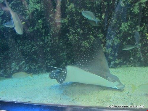 84541  sydney aquarium