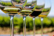 una terra di vini pregiati