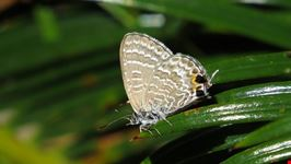 allevamento delle farfalle e degli insetti