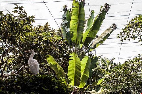 85128  kl bird park