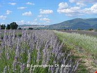 Da visitare Assisi e dintorni