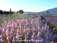 Immagini di Assisi