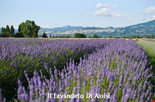 Assisi Itinerario naturalistico