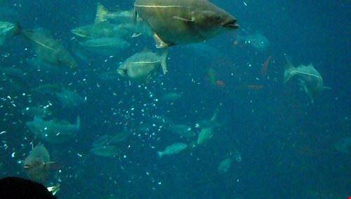 85640  diving