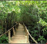 85645  jozani forest