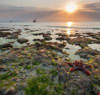 85652  spiaggia di nungwi