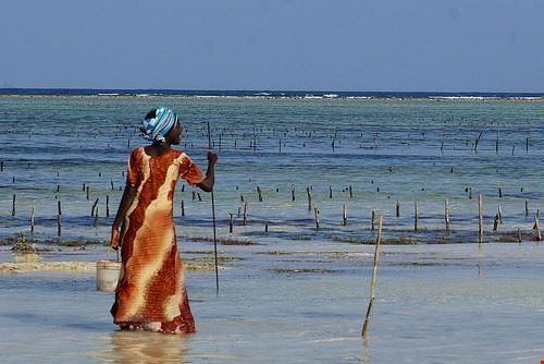 85654  spiaggia di matemwe