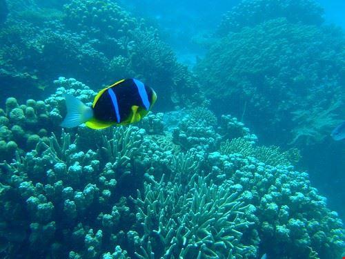 85659  snorkeling