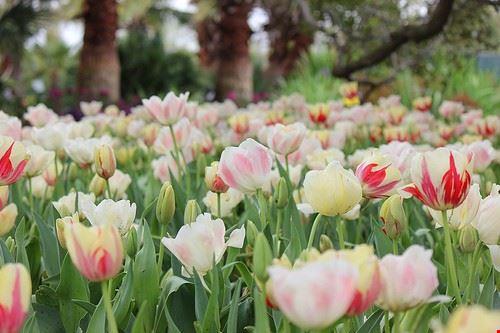 Photo Dallas Arboretum And Botanical Garden In Dallas Pictures