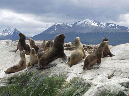 ushuaia foche
