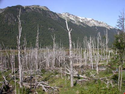 ushuaia alberi e montagne