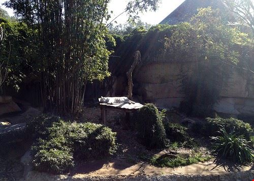 86674  audubon zoo