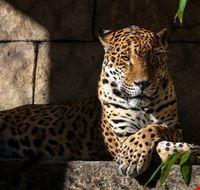 86675  audubon zoo