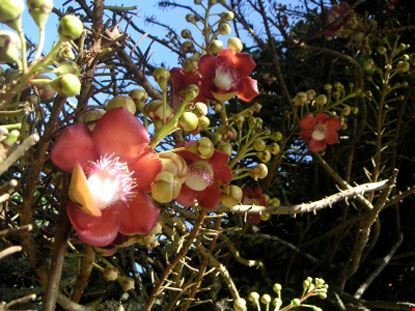 suva fiori profumati