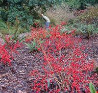86955  washington park arboretum
