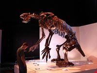 museo di scienze naturali di houston