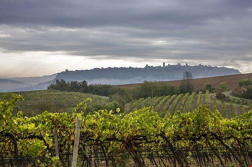 87116  i vini di orvieto