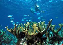 rodi garganico snorkeling