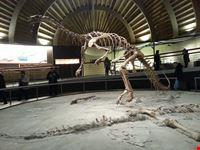 museo archeologico comunale