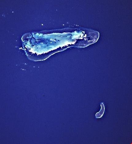 la digue aldabra 1