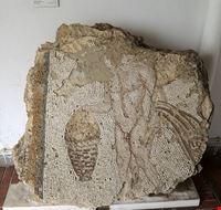 88772  museo archeologico