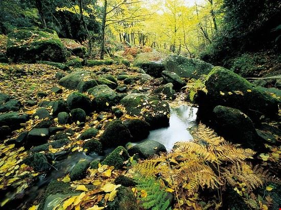 89061 montalbano elicona bosco