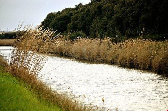 fiumicino oasi di macchiagrande