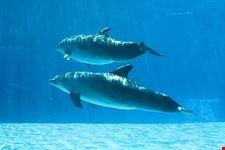 i cetacei del mar ligure