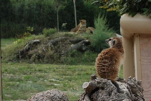 parco zoo la falconara