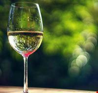 vino falerno