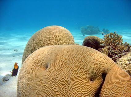 vanua levu coralli sul fondale marino