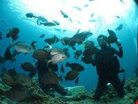 smile diving immersioni ed escursioni
