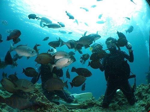 92115  smile diving immersioni ed escursioni