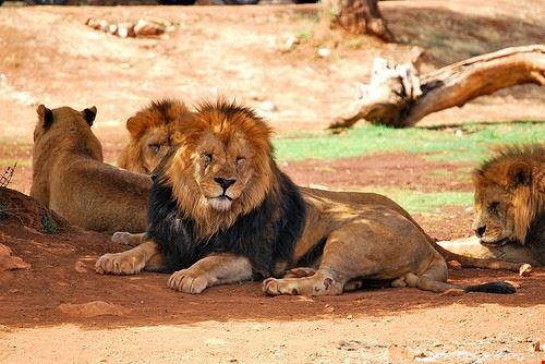 92198  zoosafarilandia