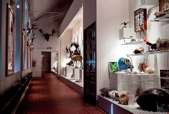 93860 deruta museo storia naturale deruta