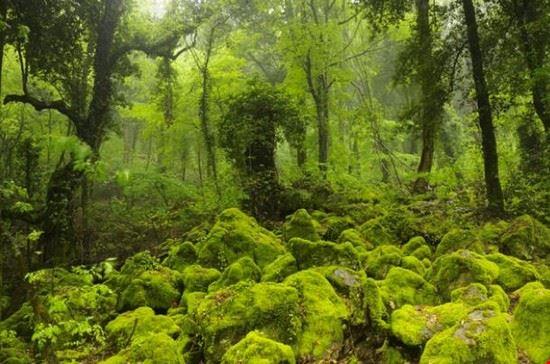 torre alfina bosco sassetto