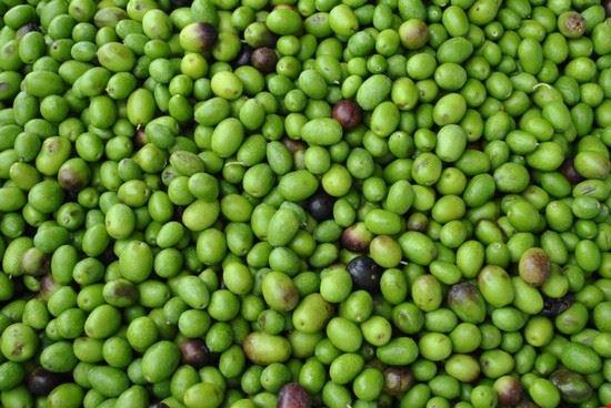 olive toscane