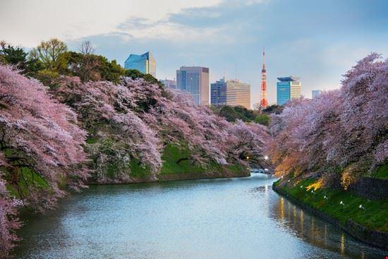 96170 tokyo parco di ueno