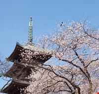 96171 tokyo parco di ueno