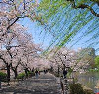 96172 tokyo parco di ueno