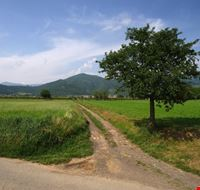 Gussago - campagna