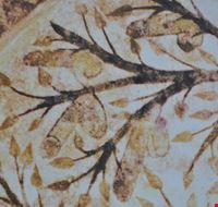 96436  l albero della fecondita