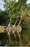 Floridia natura
