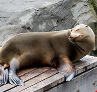 96790  erlebnis-zoo