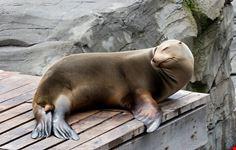 erlebnis-zoo